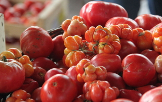 Various kinds of tomatoes
